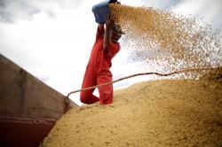 美國農業部:中國再向美購買13.6萬噸大豆
