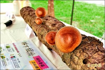花蓮林下種菇、養蜂 一公頃產值400萬