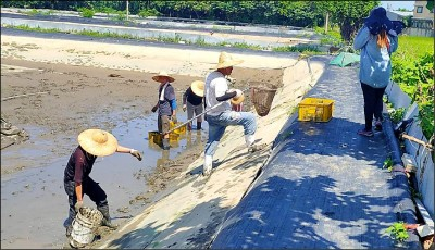 蝦之殺手 中國傳來病毒 新北、竹縣中鏢