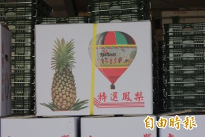 鹿野鳳梨盛產 品質好盤商愛