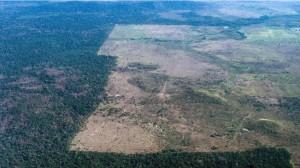 亞馬遜雨林被留「傷痕」 巴西宣布破獲元兇