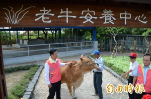 「牛」有所終 縣府設老牛安養中心