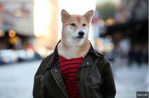 帥氣潮狗穿男裝…變時尚名牌代言人