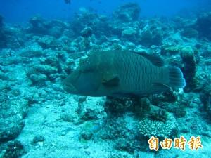 攤販賣保育類「龍王鯛」 違反野生動保法