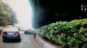 龍柏暗藏GPS 竹北警循線破獲盜樹集團
