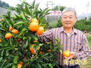台灣獼猴搶先品嚐福柑 果農哭笑不得
