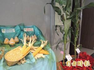 台銘「毒玉米」說 台南農改場:甜玉米不需多用藥