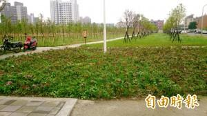 高雄樹木銀行啟用 萬株喬木成為新綠地