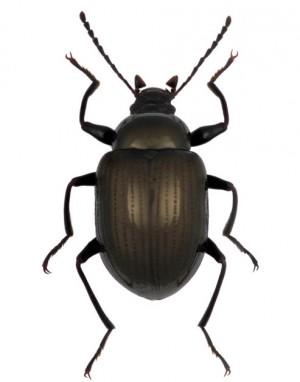 又有新物種!墾丁發現3種擬步行蟲 取名心慧、仕傑