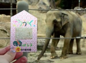 動物園推開運御守…竟是用大象「便便」