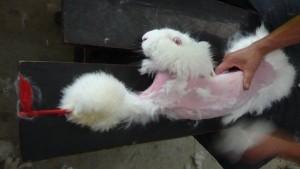 拔毛方式殘忍惹議 ZARA母公司停售安哥拉毛服裝