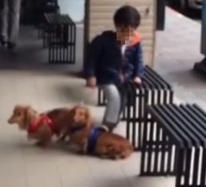 放任孩子踹狗被「關切」 父親:有意見嗎?