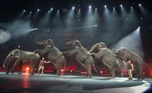 不堪虐象輿論 馬戲團宣布逐步取消大象表演