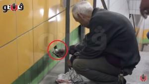 貓咪卡牆內5年 老闆每日送食不離不棄