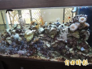 實驗中學珊瑚礁大使 細說海洋生態