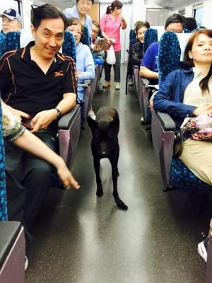 小黑的奇幻旅程! 網友接力將誤搭火車小狗送回家