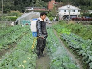 民眾花錢認養菜園 農友專人LINE圖
