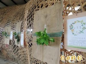 教你當神農 無負擔協會辦野菜民俗植物展