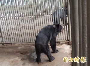 黑熊攻擊飼主 消防員綁籠門超驚險!