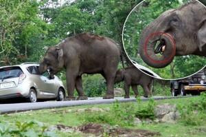印度母象「搶劫」遊客包包  得手後還直接吞下肚