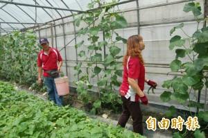 支持在地農民友善耕種 水林2校將購買有機蔬菜