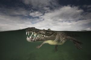 攝影師熱愛潛水 拍出海陸之間的美麗