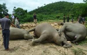 3隻大象集體暴斃 有著動人故事