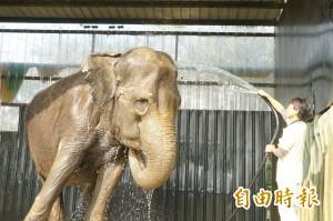 動物消暑絕招 愛麗美愛沖澡 猿猴愛吃冰
