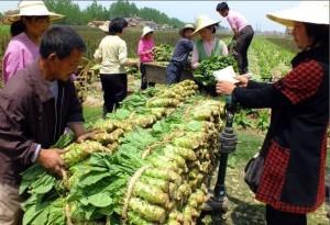 扯!強國賣蔬菜1/4先扔掉 每年「垃圾」達230萬噸