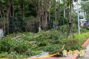 北市樹倒嚴重 樹醫:國賠幾百萬 不如花錢維護好