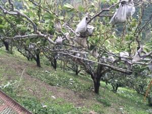 張男竊佔公有地38年 種果樹、蓋茶廠…現被起訴還沒收