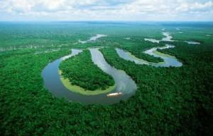 研究:2050年如「印度大」雨林恐消失