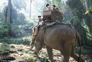 泰國大象發狂刺死象夫 3中國客嚇到逃入森林中
