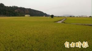 春耕、豐穀兩公司自種稻米 中秋捐弱勢
