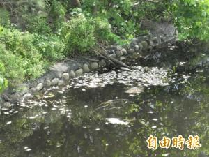 麥寮六輕截水溝魚群暴斃 綿延2公里