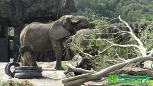 颱風過後的動物園 牠們意外成為最快樂動物…