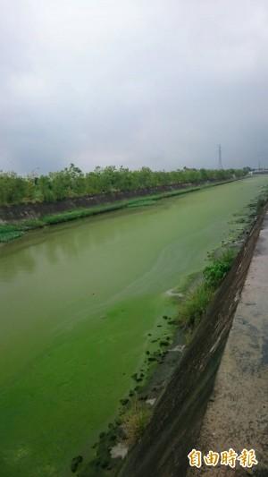 啊娘喂!鹽水溪排水線變「綠江」