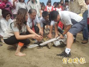 龜向大海 澎湖野放12隻綠蠵龜