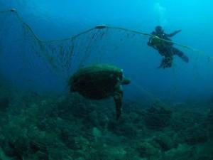 諷刺!墾丁保護區佈漁網 綠蠵龜卡網慘死
