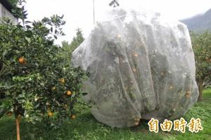 防猴害出招!台東農改場推廣果樹網罩