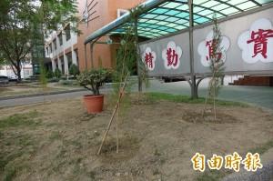 打造無蚊校園 瀛海中學栽種百株澳洲茶樹