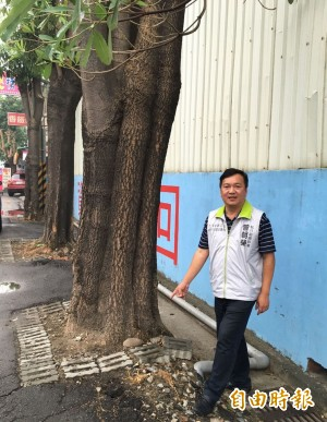 台中行道樹擋路 影響用路人安全