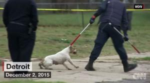 悲劇!美4歲男童慘遭4隻狗圍攻咬死