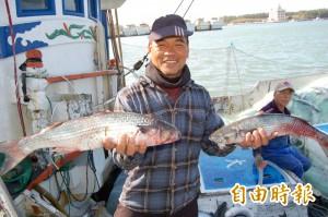 破紀錄!台南將軍漁港2萬尾野生烏魚來了