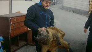 新竹動物園鱷龜遭變賣 賊瞎掰:我溪裡釣的