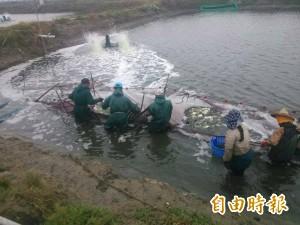霸王級冷氣團來襲 「覽趴水」業者逃過一劫