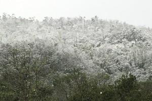 佛光大學下雪了 皚皚山色美不勝收