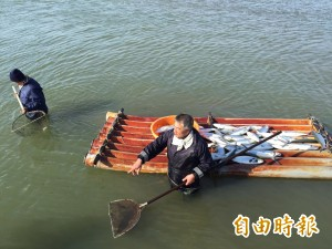 雲林虱目魚凍死逾3萬尾 漁民在刺骨塭水撈魚