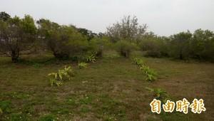 砍防風林蓋垃圾場,南市:飽和後會復育為保安林