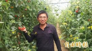 這位青農很有愛 栽種小蕃茄助家扶